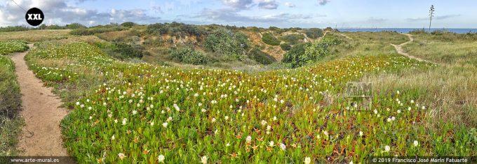 J7366604. Spring landscape. Lagos, Algarve (Portugal)