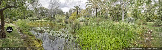H5081204. El Arboreto del Carambolo. Sevilla. Spain