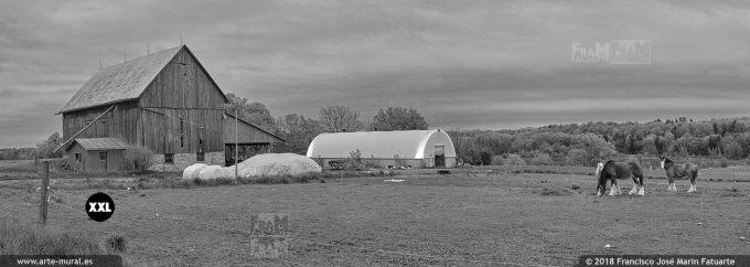 I65716B2. Cattle farm in Ontario. Canada